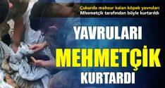 Boğulmak Üzere Olan Yavrularını Mehmetçik Kurtardı