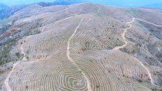 Bin 500 metrede, 6 bin dekar orman alanını böyle nakış nakış işlediler