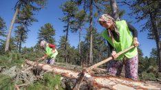 Elleri nasırlı Anadolu kadını ekmeğini ormandan çıkarıyor