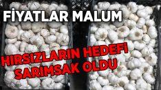 Aydın'da sarımsak hırsızları yakalandı