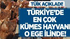 Türkiye'de en çok kümes havyanı o ege ilinde!