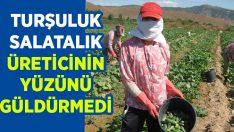 İzmir Ödemiş'te Turşuluk salatalık üreticisinin yüzünü güldürmedi!