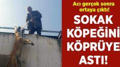Manisa Turgutlu'da sokak köpeğini köprü demirlerine astı!
