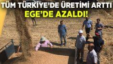 Türm Türkiye'de üretimi arttı.. Ege'de azaldı!