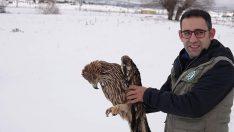 Sağlığına kavuşan şah kartalı doğaya salındı