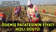 Ödemiş patatesinin fiyatı hızlı düştü!