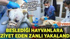 Beslediği hayvanlara eziyet eden zanlı yakalandı.. Hayvanlar koruma altına alındı!