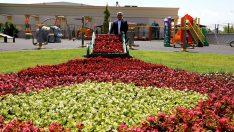Afyon'da yarım milyon çiçek toprakla buluştu