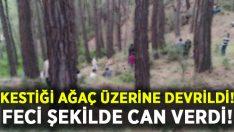 Kestiği ağaç üzerine devrildi.. Mustafa Yıldırım hayatını kaybetti!