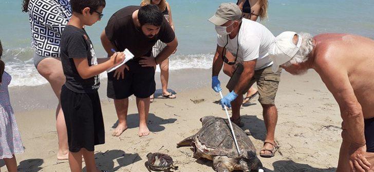 Aydın'da 2 deniz kaplumbağası ölü bulundu