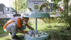 İzmir sıcaklarında Buca Belediyesi'nde mama ve su seferberliği