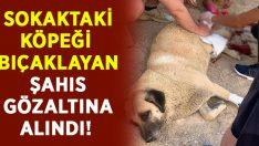 Sokaktaki köpeği bıçakladı.. Pişkin tavırları sonrası gözaltına alındı!