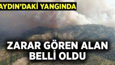 Aydın'daki yangında 140 hektar alan zarar gördü