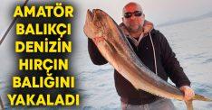 Amatör balıkçı denizin hırçın balığını yakaladı