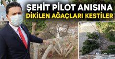 Şehit pilot anısına dikilen ağaçları kestiler