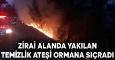Zirai alanda yakılan temizlik ateşi ormana sıçradı