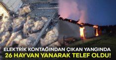 Elektrik kontağından çıkan yangında 26 hayvan yanarak telef oldu!