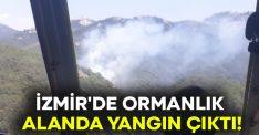 İzmir'de ormanlık alanda yangın çıktı!